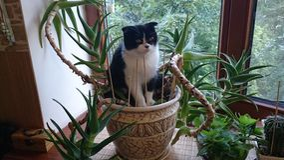 Chat se reposant dans un pot avec l'aloès image stock