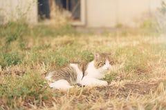 Chat se reposant en parc par jour ensoleillé Photos stock