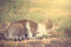 Chat se reposant en parc par jour ensoleillé Photo stock