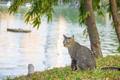 Chat se reposant par la rivière Images stock