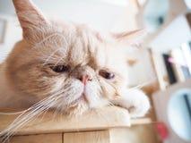 Chat se reposant sur la table Photo stock