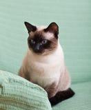 Chat se reposant sur le divan Photographie stock libre de droits