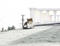 Chat se reposant sur le toit photographie stock libre de droits