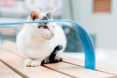 Chat se reposant sur un banc Photographie stock