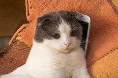 Chat se reposant sur un plaid dans le lit avec le smartphone Photographie stock