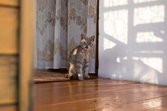 Chat se reposant sur un porche d'une maison dans le village Images libres de droits