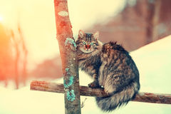 Chat se reposant sur une barrière Photo libre de droits