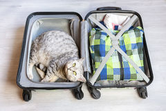 Chat se situant dans la valise emballée photo stock