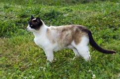 Chat se tenant dans le profil dans l'herbe Photos stock