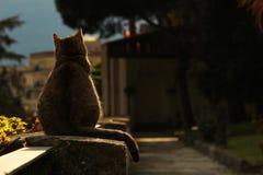 Chat se tenant sur la barrière en pierre Image libre de droits