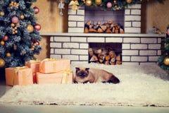 Chat se trouvant sur le tapis à la veille de Noël photos stock