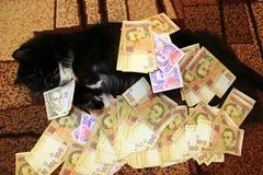 Chat se trouvant sur le tapis avec l'argent Images libres de droits
