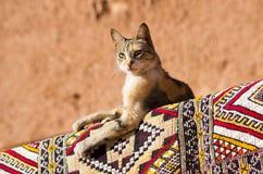 Chat se trouvant sur le tapis dans le pays africain Photographie stock