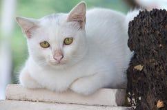 Chat se trouvant sur un poteau et un vieil arbre sec images libres de droits