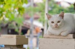 Chat se trouvant sur un poteau et un vieil arbre sec photo libre de droits