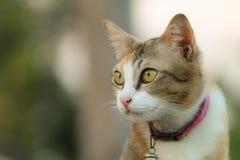 Chat seul à l'arrière-plan de tache floue  Images stock
