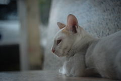Chat seul photographie stock