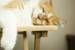 Chat somnolent Images libres de droits