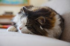 Chat somnolent Photographie stock