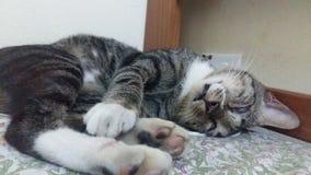 Chat somnolent Photo libre de droits