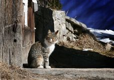 Chat somnolent Images stock