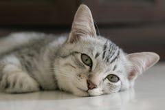 Chat somnolent sur le plancher Photographie stock