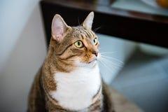 chat soupçonneux Photo libre de droits