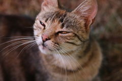 chat soupçonneux images libres de droits