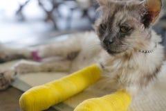 Chat supérieur avec deux jambes cassées Photos libres de droits