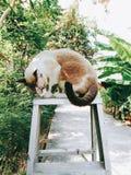 Chat sur l'arbre Image stock