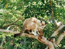 Chat sur l'arbre Photographie stock