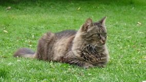 Chat sur l'herbe Image stock