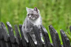 Chat sur la barrière Image stock