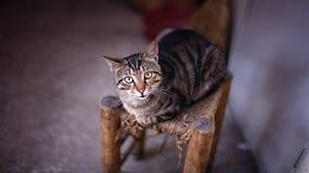 Chat sur la chaise image stock