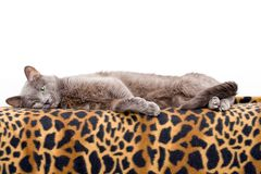 Chat sur la couverture Photographie stock