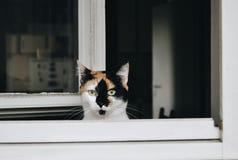 Chat sur la fenêtre Photos stock
