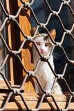 Chat sur la fenêtre avec la barrière de fer photographie stock