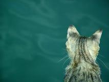 Chat sur la mer Photos libres de droits