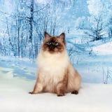 Chat sur la nature d'hiver dans la neige Photographie stock libre de droits
