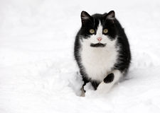 Chat sur la neige blanche Images stock
