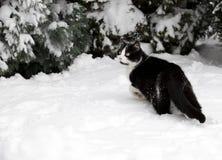 Chat sur la neige blanche Photographie stock libre de droits