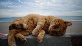 Chat sur la plage Photos libres de droits