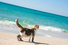Chat sur la plage Photographie stock