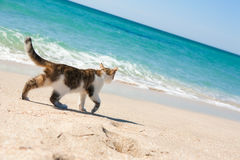 Chat sur la plage Photos stock
