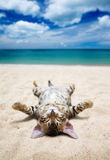 Chat sur la plage Images stock