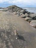 Chat sur la plage sablonneuse Photo stock