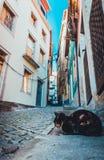 Chat sur la rue étroite de Porto photographie stock libre de droits