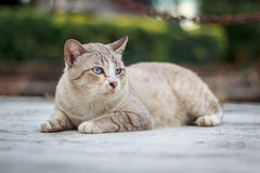 Chat sur la rue Photo stock