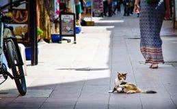 Chat sur la rue d'Essauira Images libres de droits