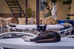 Chat sur la table en café, Bugibba Photographie stock libre de droits